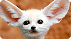 Adorable Baby Animals Quiz: Do you know what these common critters look like as kids?