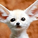 Adorable Baby Animals Quiz