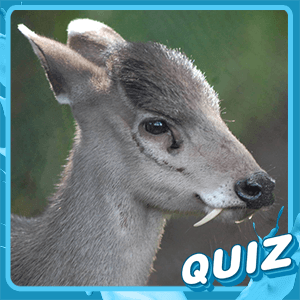 Play Obscure Animal Quiz | Independent