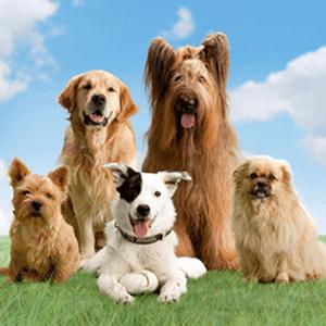 Dog Breed Quiz Uk