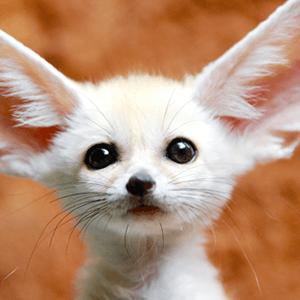 Play Adorable Baby Animals Quiz Washington Post The